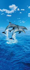 Фототапет Three Dolphins 86*200
